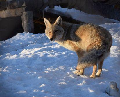 Aspen Valley Animal
